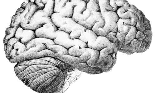 Améliorer sa concentration et sa mémoire